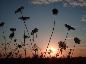 1539758-2-summer-evening