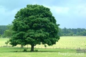 15_19_8---Tree--Northumberland_web